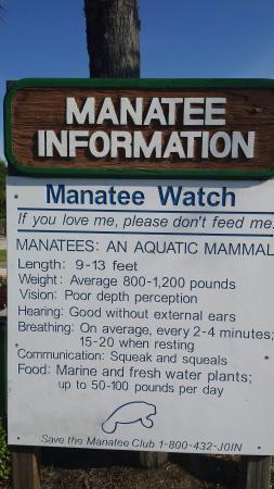 Crane Creek Promenade Manatee Observation Area