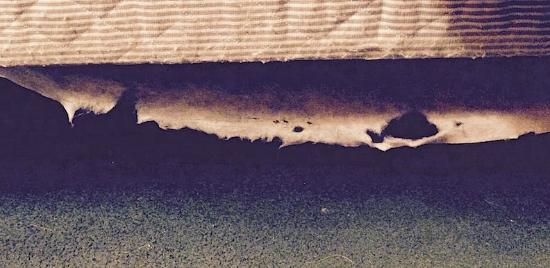 Econo Lodge: filthy carpet w/hair, etc. & ragged mattress lining falling off mattress