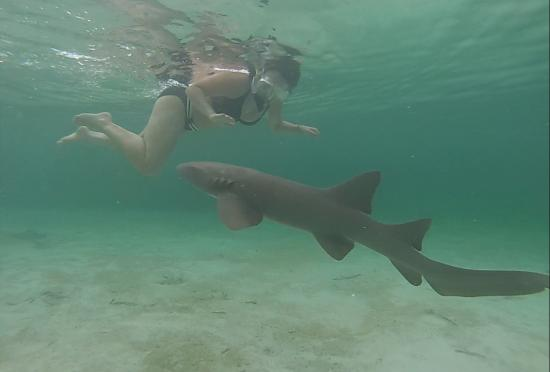Bahama Beach Club: Very friendly Nurse Sharks