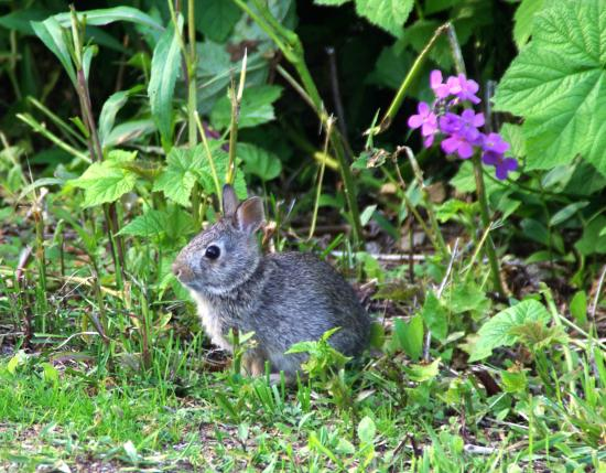 Baileys Harbor, WI: Bunny along the way