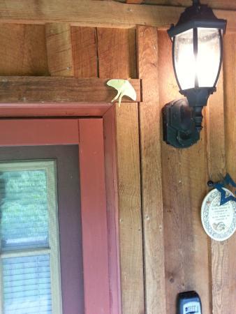 Cramer's Creekside Cabins : front door