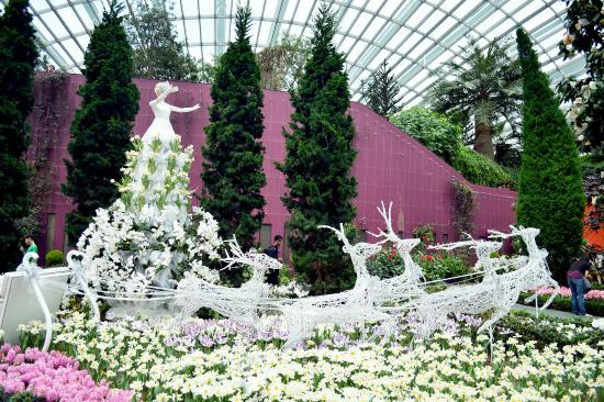 gardens by the bay inside the flower dome at garden by the bay during the