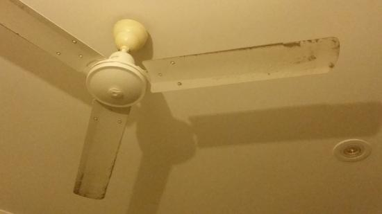 Tropical Nites: dirt encrusted on the ceiling fan