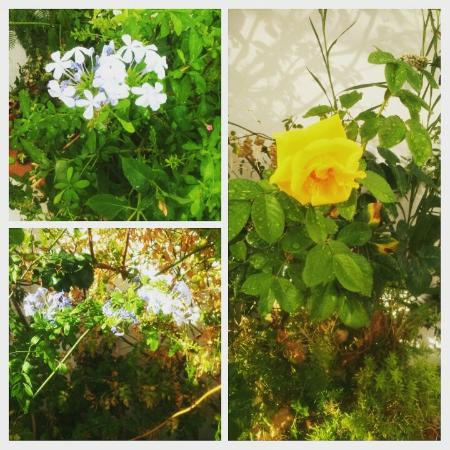 Hospederia Castillo de Alcaudete: La flores de nuestro patio