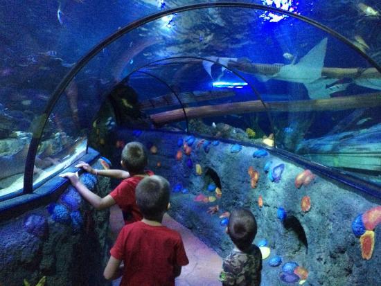 Aquarium Sea Life - Foto di Gardaland SEA LIFE Aquarium, Castelnuovo ...