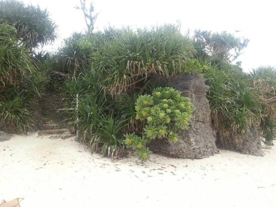 Yyy Resort Ie Island
