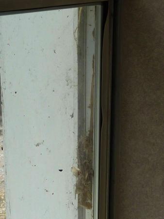 Days Inn by Wyndham Durango: Zustand Fenster im Zimmer