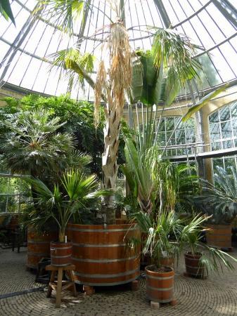 Foto De Jardín Botánico ámsterdam Botanischer Garten Hortus