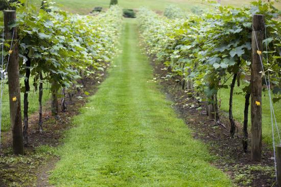 Three Rivers Wine Trail: Vineyard @ Heritage Winery