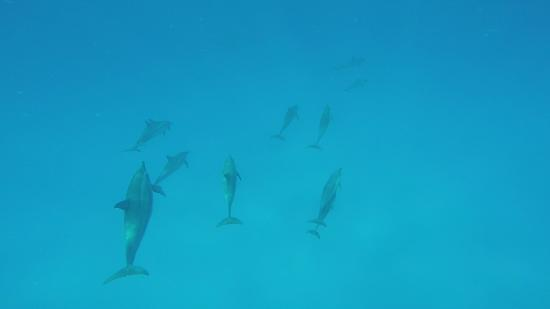 Kona Ocean Adventures: Swimming with the Dolphins in the Ocean