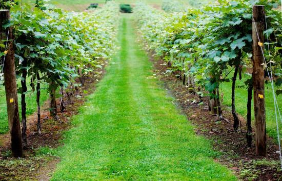 Heritage Vineyard Winery