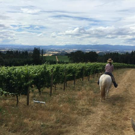 Equestrian Wine Tours: Sarah, our guide, taking the lead on her beautiful Andalusian!