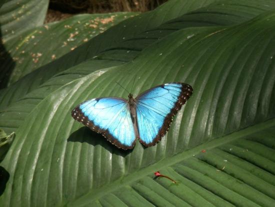 Li-Li Bed & Breakfast: Butterfly park