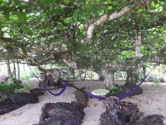 La Piscina Natural: hammocks under a tree!