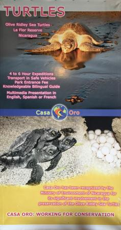 Casa Oro Eco Hostel: Don't miss the turtle tours. July-December are peak months.