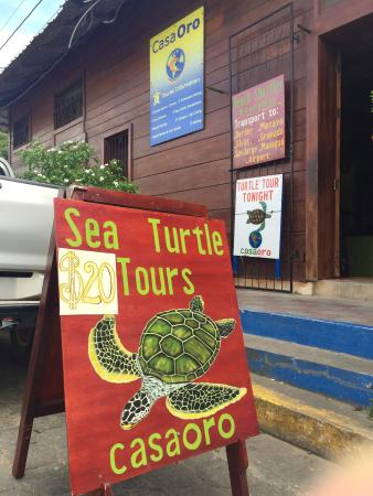 Casa Oro Eco Hostel: Sea turtle tours