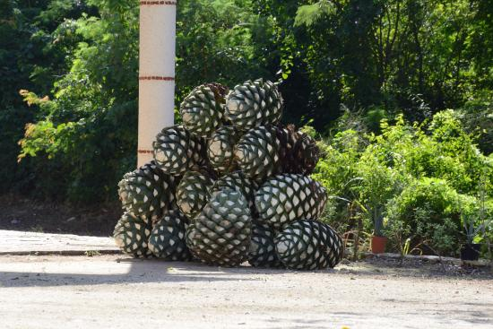 Mayapan Traditional Agave Distillery: Tequila