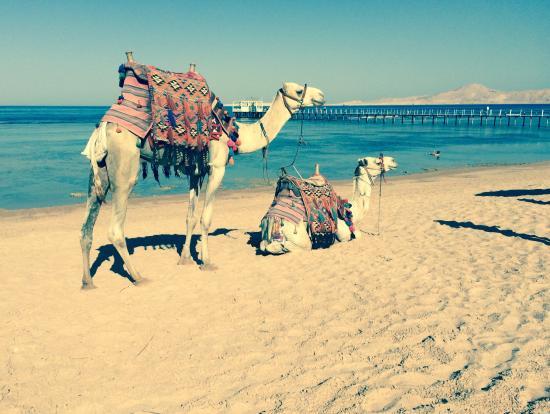Rixos Sharm El Sheikh: Amazing.....