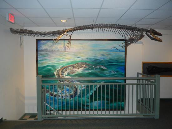 University of Wyoming Geological Museum: Sea Creature