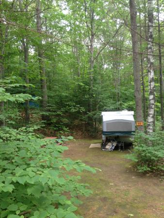 Timberland Campground: Primitive for tents and pop ups