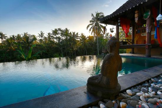 Capung Sakti Maison d'Hôtes : The Infinity Swimming Pool