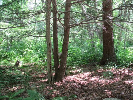 Hope Valley, RI: woods to explore