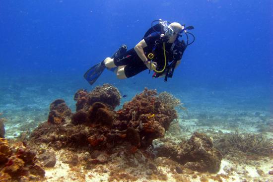 Me picture of aqua safari dive shop cozumel tripadvisor - Dive shops near me ...