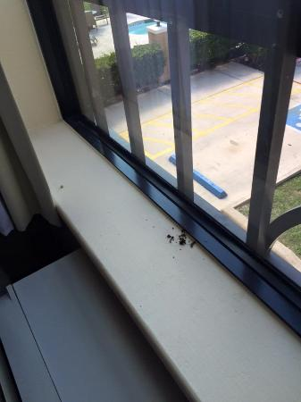 Holiday Inn Express Hotel & Suites San Antonio: Bugs on the window sill in the first room (1st out of 3 rooms we stayed in during our 1-night st