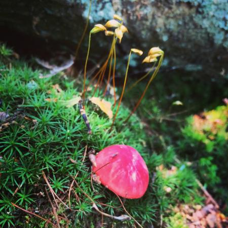 Southington, CT: Fungus is Among Us