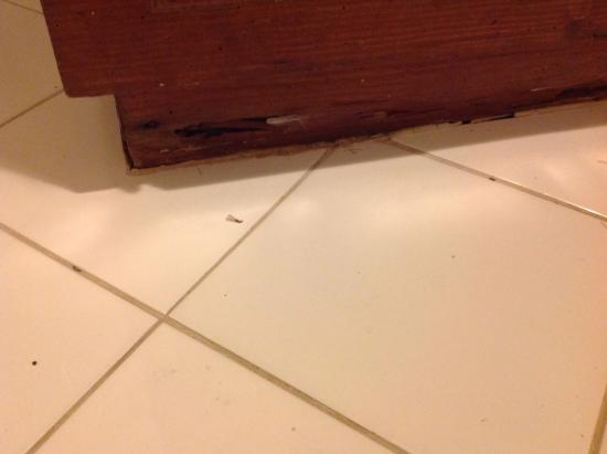 The Crown Villas at Lifestyle Holidays Vacation Resort: Termites in bathroom