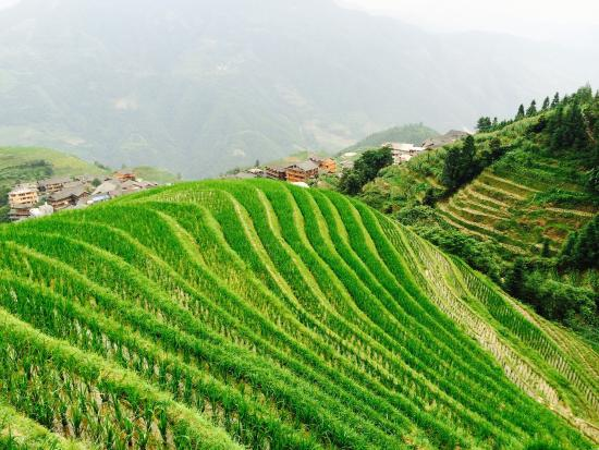 Dragon's Backbone Rice Terraces : photo1.jpg