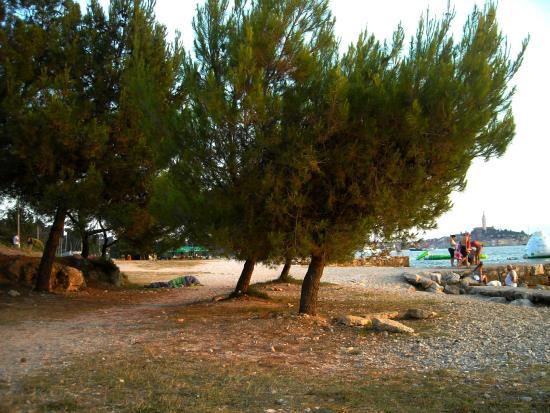 Camping Porton Biondi Rovinj: La spiaggia