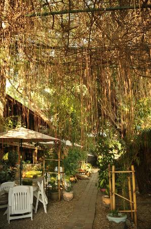 Hotel California Dili : Luxuriant vegetation