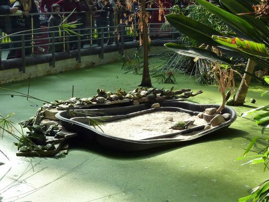 Laghetto con tartarughe picture of estacion de atocha for Tartarughe laghetto