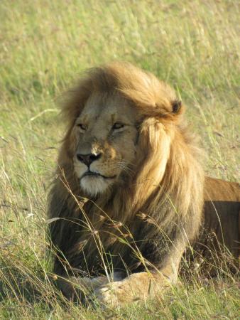 Bongo Safari- Day Tour : One of the many experiences with Bongo Safari