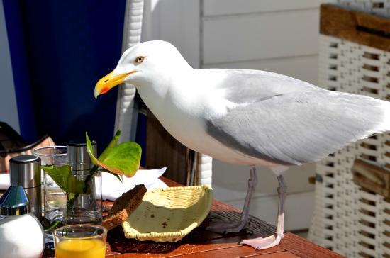 Dorint Strandresort & Spa Sylt-Westerland: Vorsicht Diebe beim Frühstück