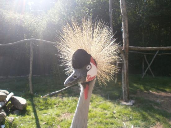 Bubry, France : De superbes animaux dans le parc