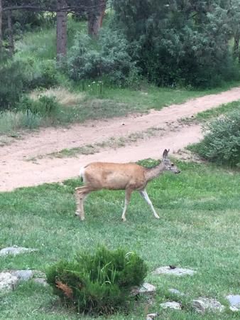 Gilded Pine Meadows Bed and Breakfast: Front yard deer and old antiques