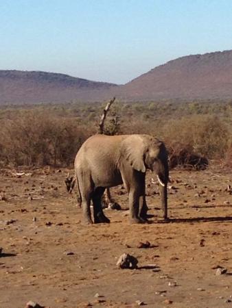Takadu River Camp Lodge : My favourite elephant.