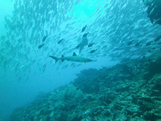 Scuba Dive Sipadan