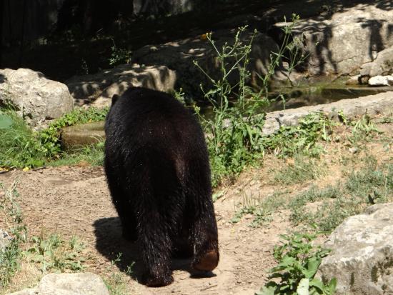 Image D Ours Brun l'ours brun qui nous tourne le dos - picture of parc de la tete d'or
