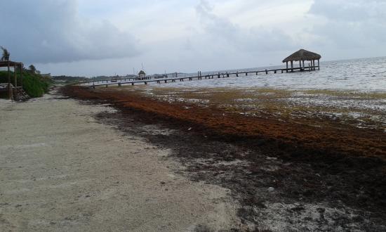 Azul Beach Hotel: Seeweed on the beach