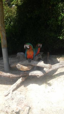 perroquets aras picture of zoa parc animalier et exotique sanary sur mer tripadvisor. Black Bedroom Furniture Sets. Home Design Ideas