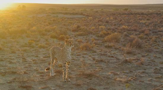 Inverdoorn Game Reserve : The Safari
