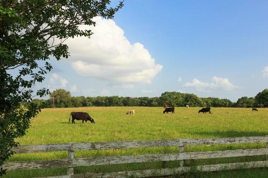 Cat Spring, Teksas: Texas Ranch Getaway