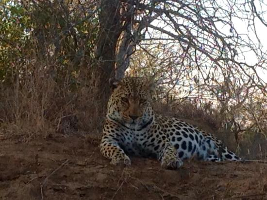 Thornbush Game Reserve: Leopard and cub sightings that thrilled me