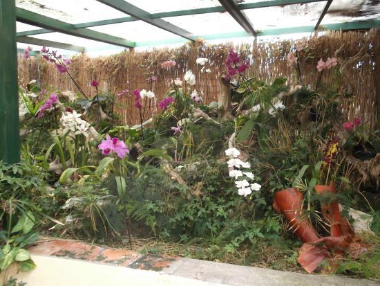 Orchideen picture of jardin de orquideas de sitio litre for Jardines de orquideas