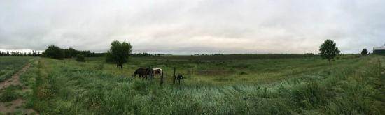 Stevenson Farms B&B: horses