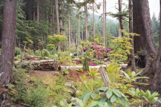 Glacier Gardens Picture Of Glacier Gardens Rainforest