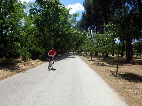 Bicicletas no parque picture of casa de campo madrid - Casa de campo park ...